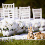 Outdoor Wedding Sydney, Outdoor Ceremony Sydney, Outdoor Wedding aisles